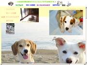 千葉県のライブカメラ:2台のカメラによる真っ白いMIX犬「さくら」の今の様子