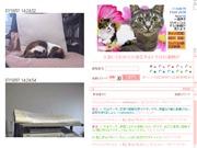 東京都のライブカメラ:お留守番している猫「ミケりん」「トラにゃん」の今の様子
