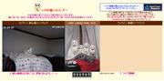 東京都のライブカメラ:管理者の愛猫「シロ」とその子供の「良太,白猫丸(はくみょうまる),ちびしろ,桂,トラ子」の今の様子