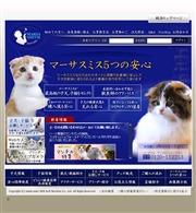 東京都のライブカメラ:目黒区自由が丘,ペットショップ「マーサスミス」の仔猫の今の様子
