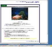 静岡県のライブカメラ:浜松市,「奥山電脳工房」のペット,巨大金魚の今の様子
